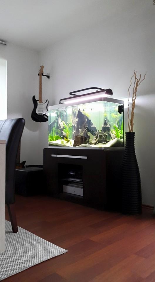 aquarium d'eXecoV - Page 11 11065911