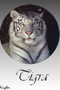 Galerie de Lyzzie Tigra_10