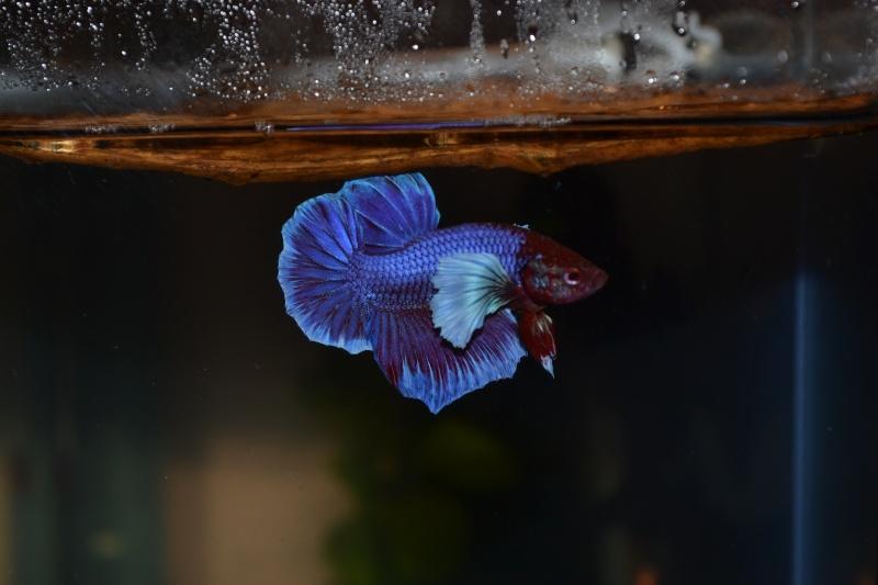 Repro Dumbo 03/12/14 Dsc_0610
