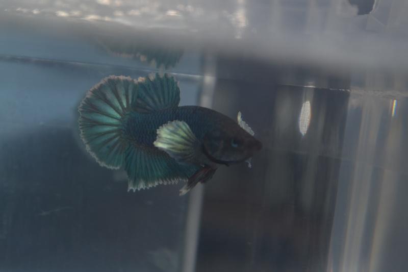 Repro Dumbo 03/12/14 Dsc_0910