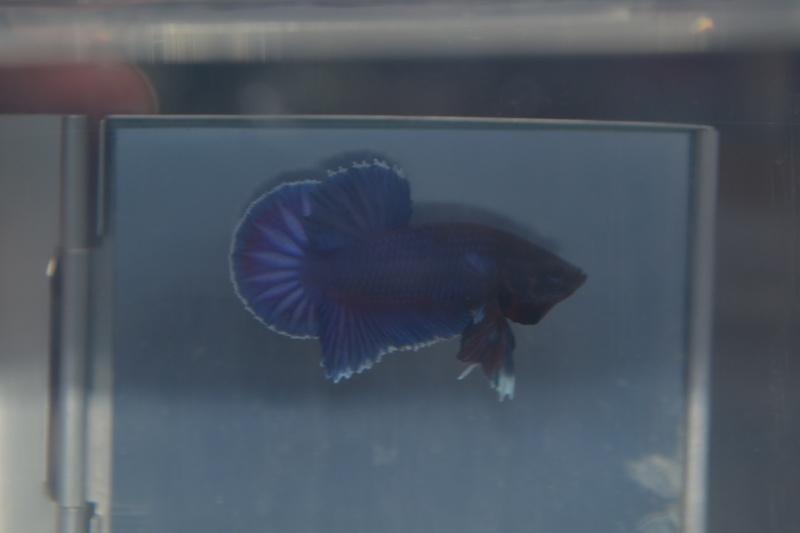 Repro Dumbo 03/12/14 Dsc_0911