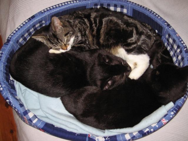 Papouille et cachou, noirs 6 mois Photo_12
