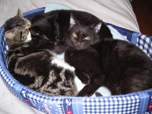 Papouille et cachou, noirs 6 mois Photo_13