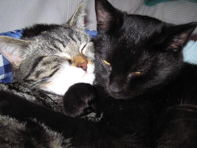 Papouille et cachou, noirs 6 mois Photo_14