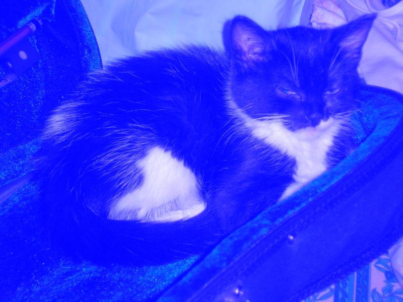 Chien ou chat ? P5270110