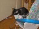 Chien ou chat ? P5270111
