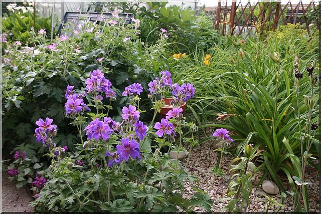 le jardin d'agrément chez Princesse Gyrani12