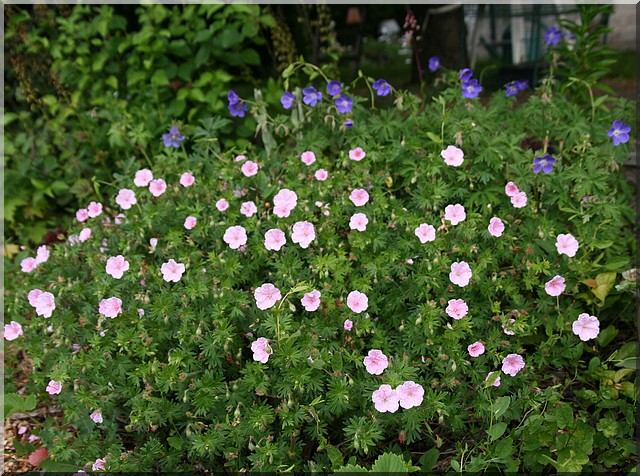 le jardin d'agrément chez Princesse Gyrani13