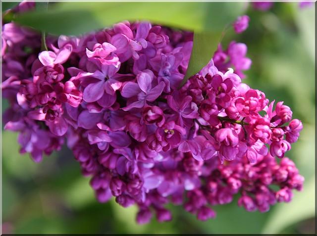 le jardin d'agrément chez Princesse Lilas_10
