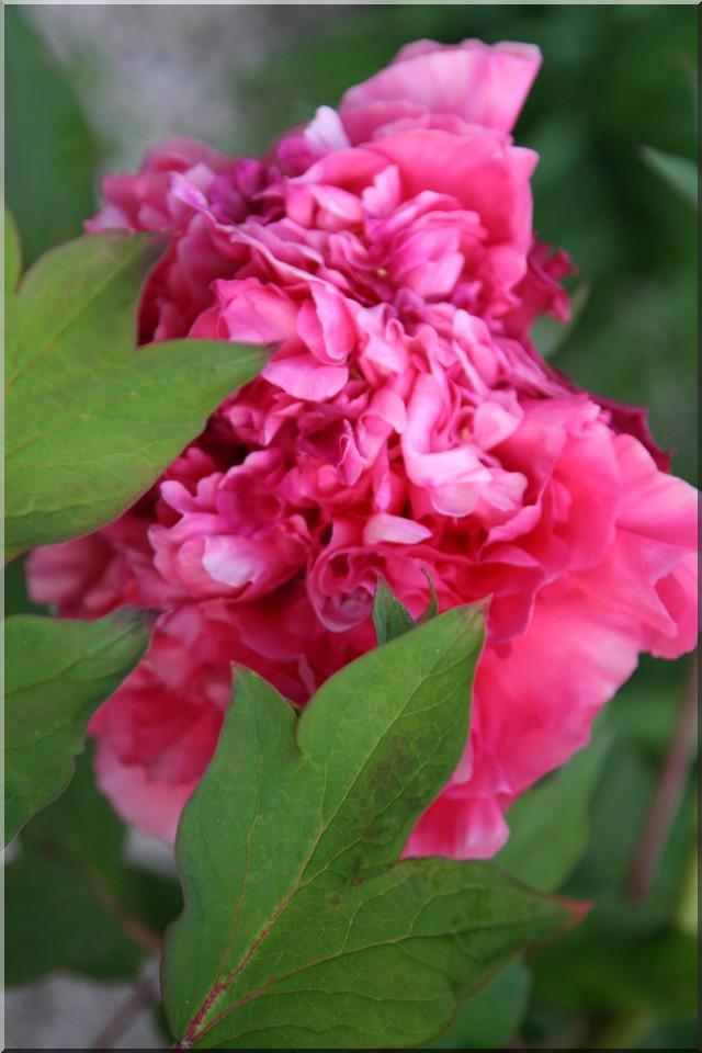 le jardin d'agrément chez Princesse Pivoin10