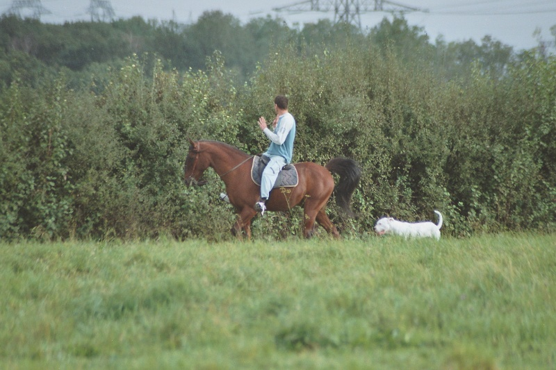 nos chevaux Imm00510