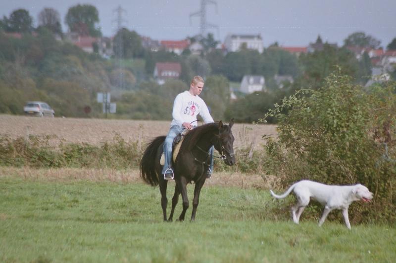 nos chevaux Imm02210