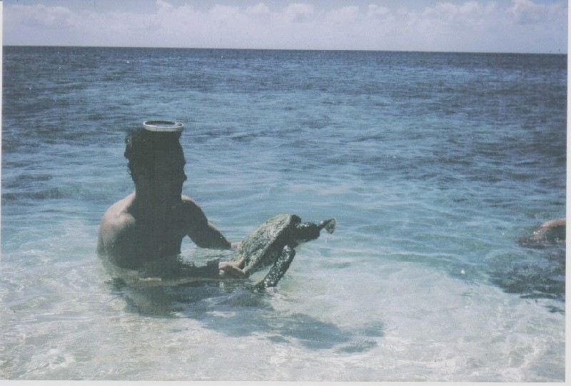 [CAMPAGNES C.E.P.] TAHITI - TOME 2 - Page 15 Tortue10