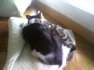 3 chatons (Kiyo, Leïla et Malo) Photo-55