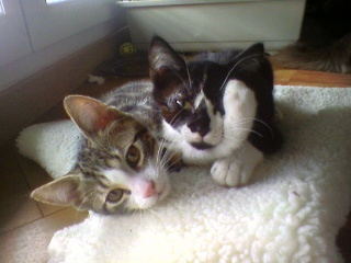 3 chatons (Kiyo, Leïla et Malo) Photo-57