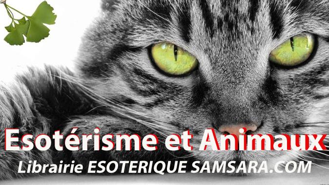 Soigner un chat par le magnétisme  Animau10
