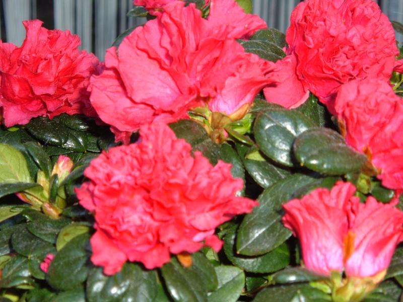 quelques fleurs du jardin avant l'hiver!! Les_fl24