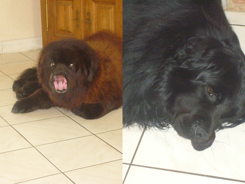 mes chiens S7001310