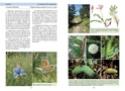 Nouvelle publication - La vie des papillons La_vie10
