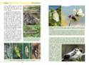 Nouvelle publication - La vie des papillons La_vie11