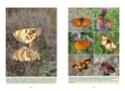 Nouvelle publication - La vie des papillons La_vie12