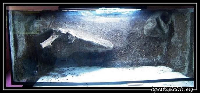 Mon aquaterrarium 100_5010