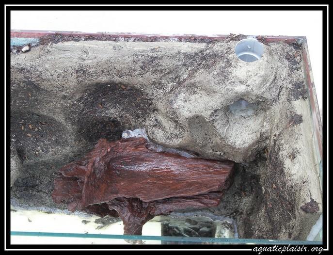 Mon aquaterrarium 100_5113