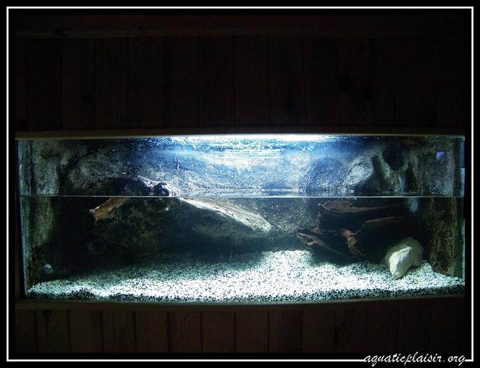 Mon aquaterrarium 100_5115