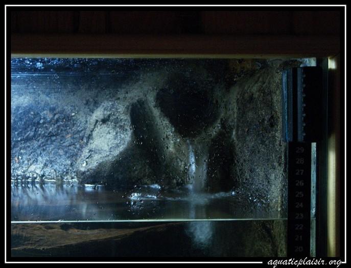 Mon aquaterrarium 100_5117