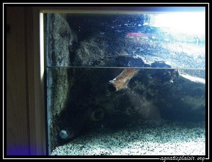 Mon aquaterrarium 100_5118
