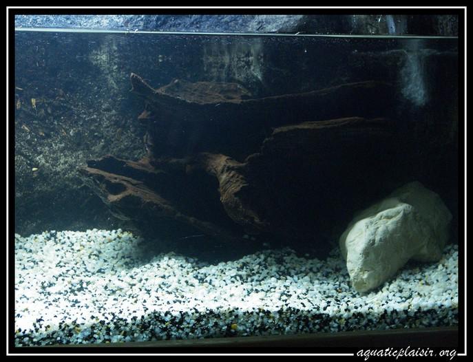 Mon aquaterrarium 100_5119