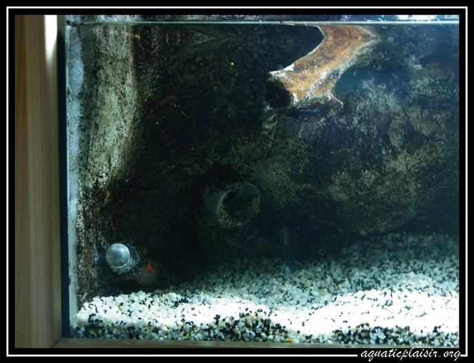 Mon aquaterrarium 100_5120