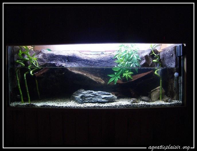 Mon aquaterrarium 100_5121