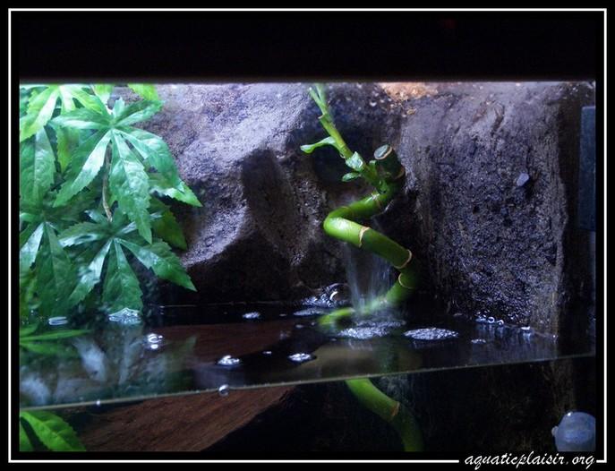 Mon aquaterrarium 100_5125