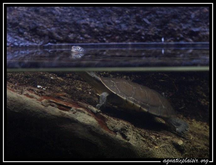 Mon aquaterrarium 100_5212