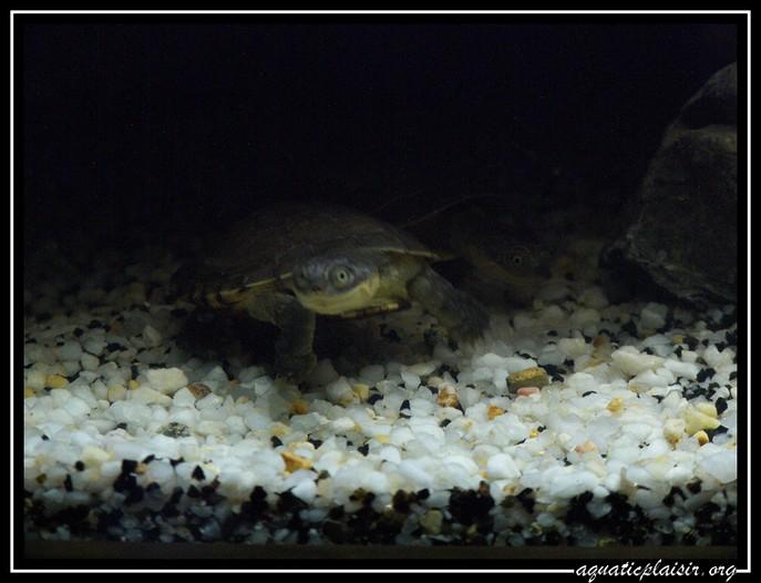 Mon aquaterrarium 100_5213
