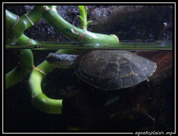 Mon aquaterrarium 100_5214