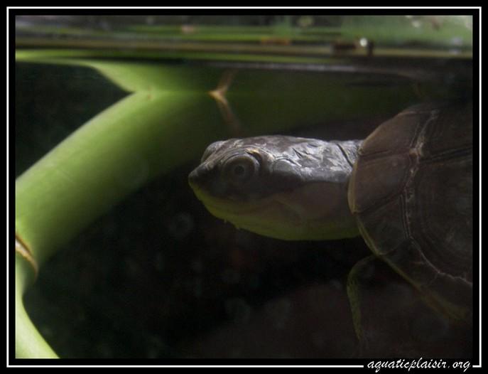 Mon aquaterrarium 100_5215