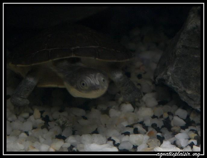 Mon aquaterrarium 100b5110