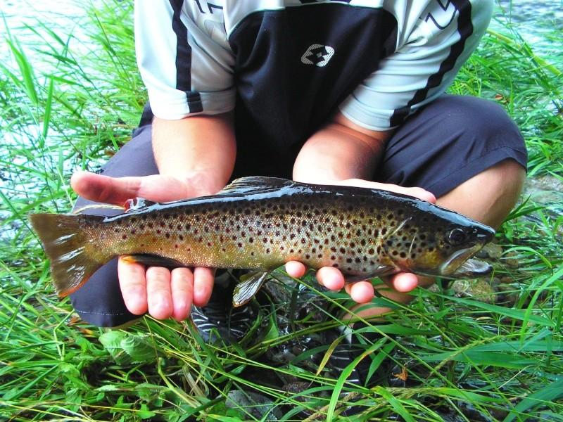 Une heure de pêche très mouvementée ! Pict0110