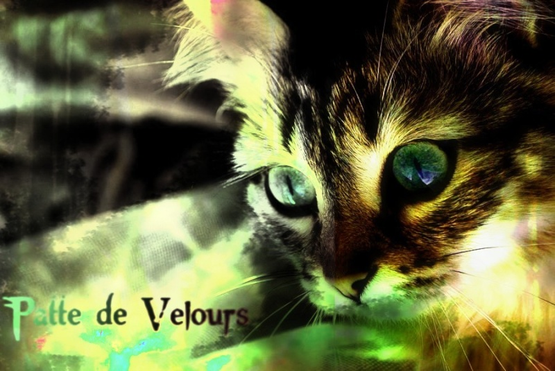 | Atelier de Pearl ♫ | OPEN MY DEAR ~ My_cat10