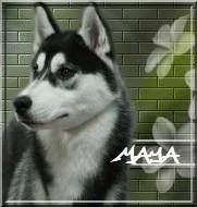 galerie de puce Mayaav11