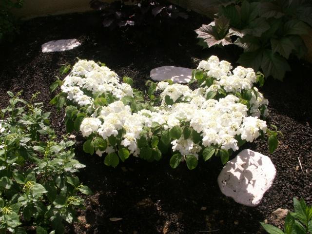 Les couleurs du printemps Pict1221