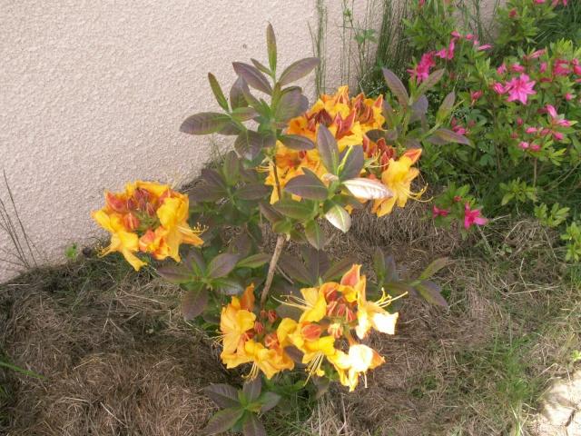 Les couleurs du printemps Pict1222