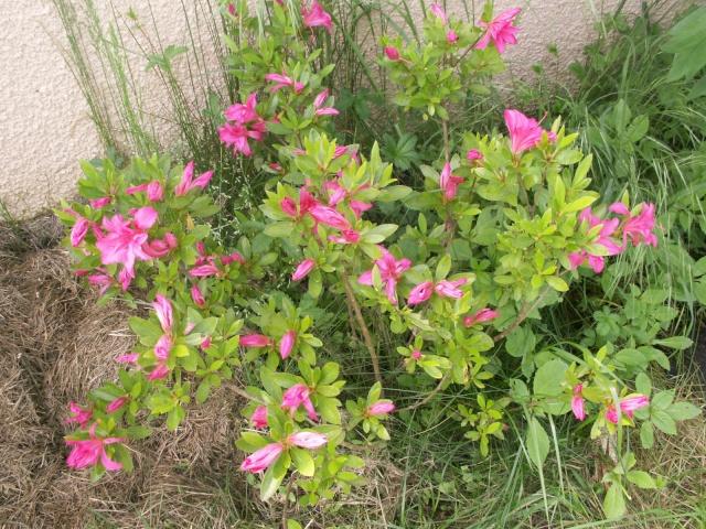 Les couleurs du printemps Pict1223