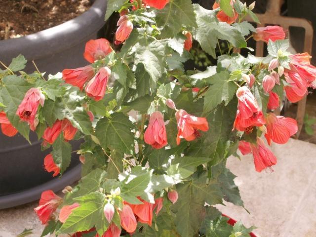 Les couleurs du printemps Pict1226