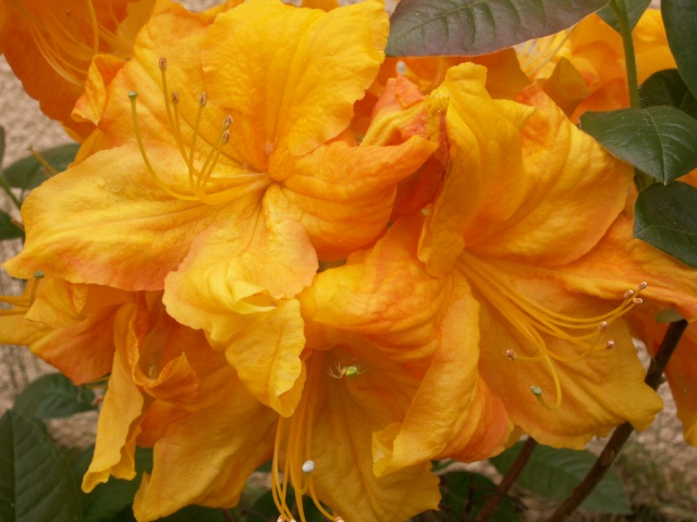 Les couleurs du printemps Pict1227
