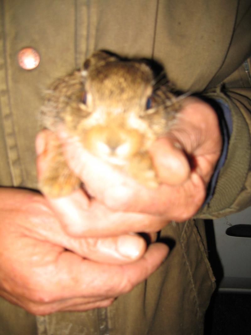 un petit rescapé [petit lièvre] Img_0013