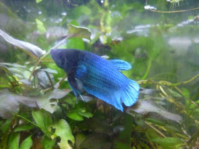 Iris et Bleuet P1120110