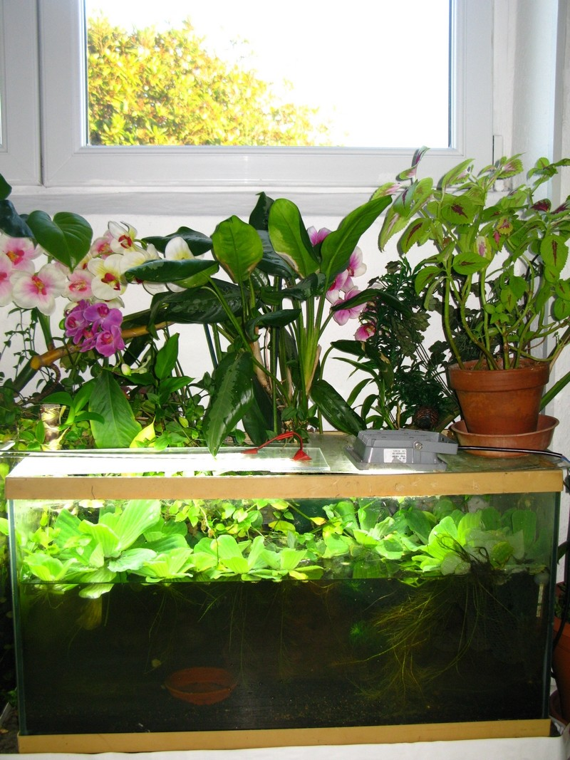 "mon ""fish-salon-room"" Ripari10"
